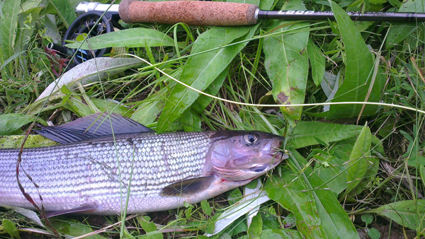 grayling01_small.png