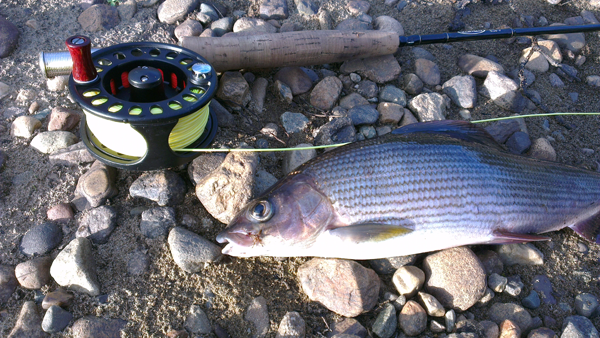 grayling02_small.png